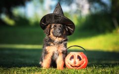 Not so Scary Halloween Costume Ideas...For Your Pet!