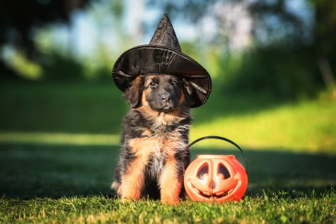 Column: Not so scary Halloween costume ideas...for your pet!