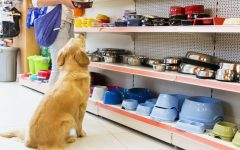 Navigation to Story: Pet Talk: Best Places to Shop for Pet Supplies (in Dallas)