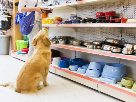 Pet Talk: Best Places to Shop for Pet Supplies (in Dallas)