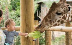Pet Talk: A little detour...best zoos to visit!