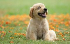 Pet Talk: How to Keep Your Pet Healthy and Safe