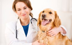 Pet Talk: Careers for Pet Lovers