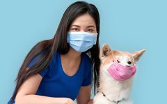 Coronavirus and quarantine concept. Young adult asian woman and her dog wearing in protective face mask looking at camera, standing isolated on grey background